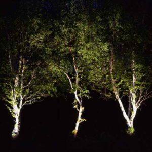3 Birken nachts beleuchtet