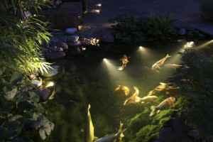 Teichbeleuchtung, Leuchten um den Teich Im Garten richtig zu beleuchten