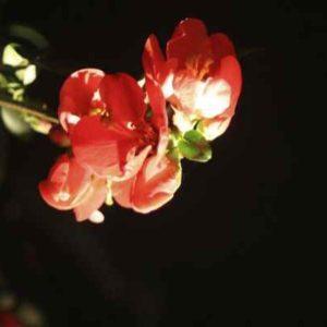 Blüten leuchten nachts