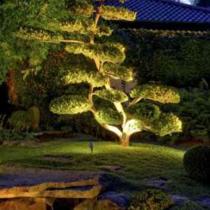 Bonsaibaum nachts angestrahlt