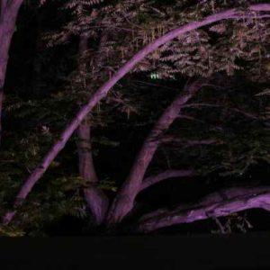 farbige Baumbeleuchtung