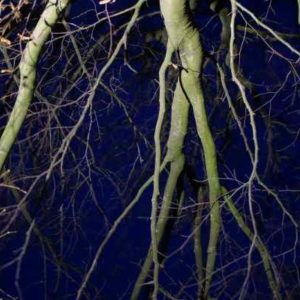 Impressionen Baumbeleuchtung