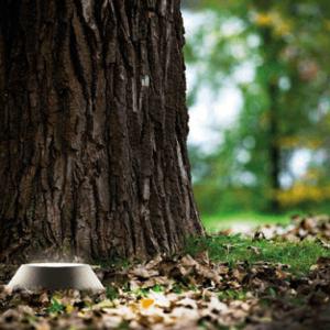 Baum Gartenspot