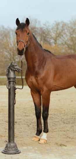 Anbindepoller mit Pferdekopf