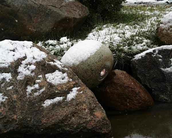 Teichstrahler Winter