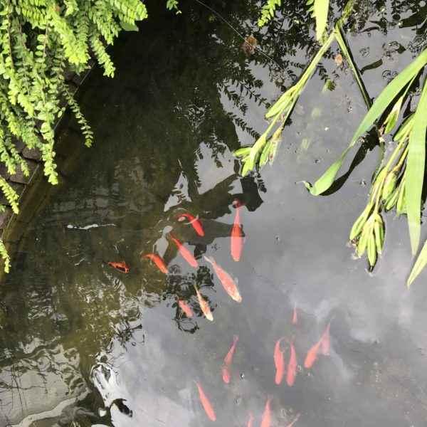 Günstige Unterwasserleuchten für den Gartenteich