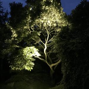 Magnolienbaum beleuchten