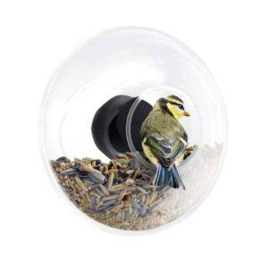 Vogel Futterstation für Fensterscheibe