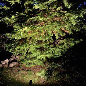 5 Meter hoher Lebensbaum einfach und schön mit Erspießstrahler beleuchtet