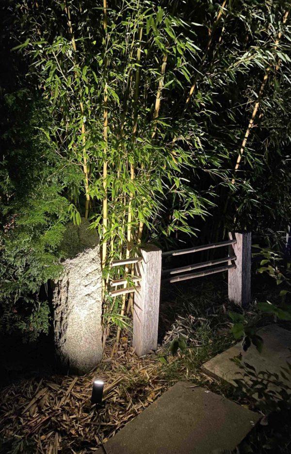 Bambus im Garten beleuchten