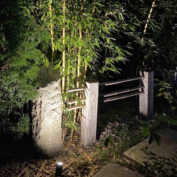 Bambus im Garten beleuchtet