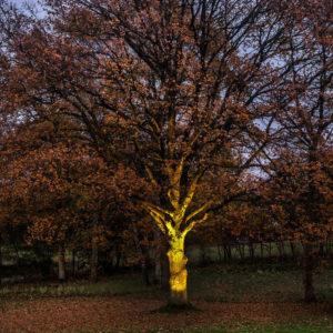Dezente Baumbeleuchtung im Außenbereich